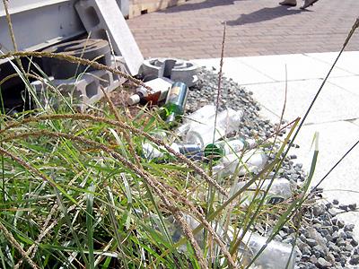 捨てられたボトルと植物